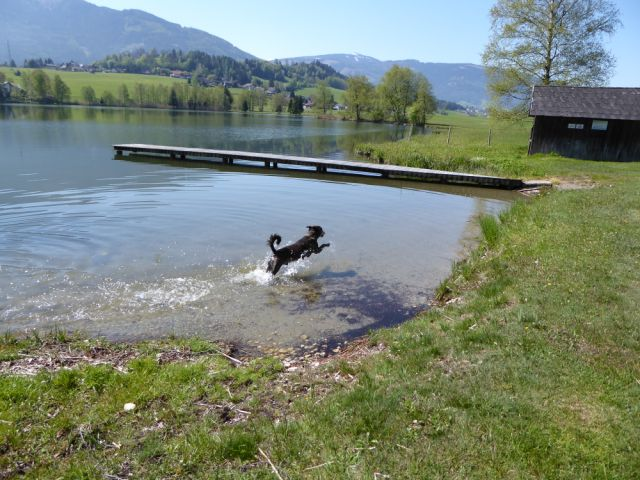 The Dog Enjoying A Swim In Austria On The Way Over