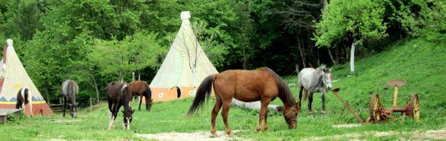 IMG_2564-001 Lakota