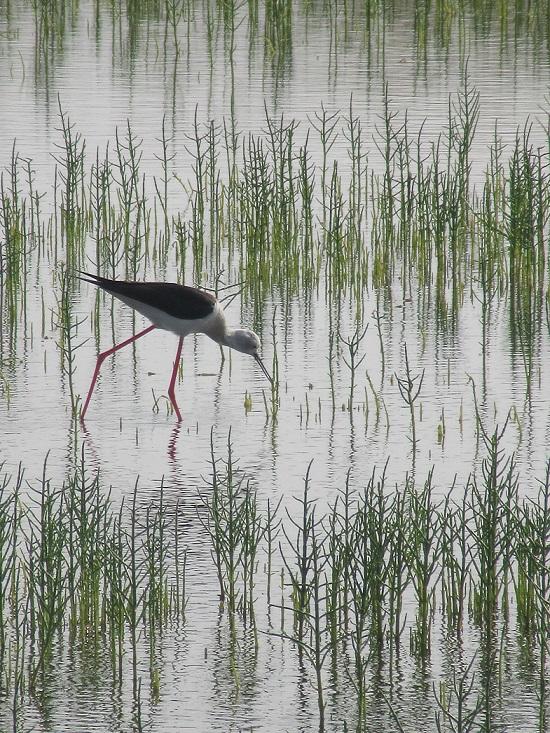 stork-smaller